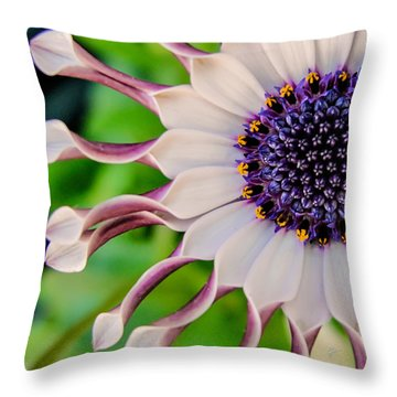 African Daisy Squared Throw Pillow by TK Goforth
