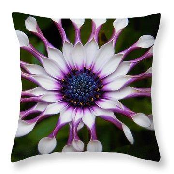 African Daisy Throw Pillow by Svetlana Sewell