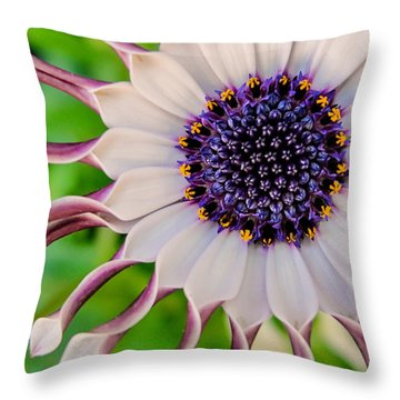 African Daisy Throw Pillow by TK Goforth