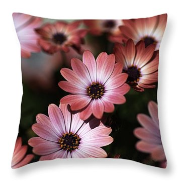 African Daisy Zion Red Throw Pillow