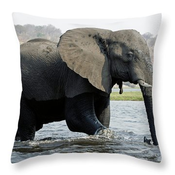 African Elephant - Bathing Throw Pillow