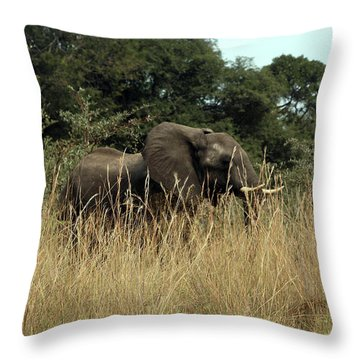 Throw Pillow featuring the photograph African Elephant In Tall Grass by Karen Zuk Rosenblatt