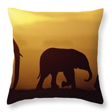 African Elephant Loxodonta Africana Throw Pillow by Karl Ammann