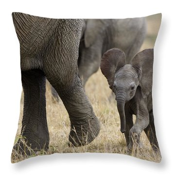 African Elephant Mother And Under 3 Throw Pillow