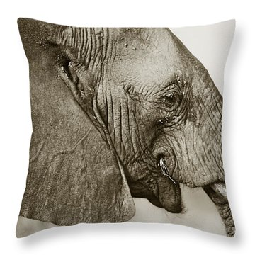 African Elephant Profile  Duotoned Throw Pillow