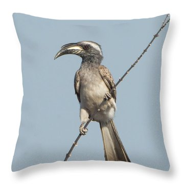 African Grey Hornbill Tockus Nasutus Throw Pillow by Panoramic Images