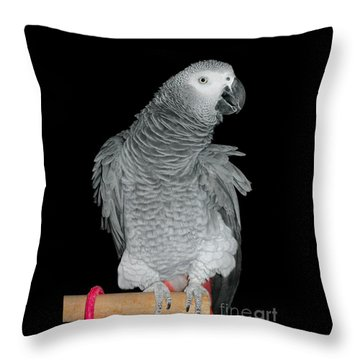 Throw Pillow featuring the photograph African Grey Parrot by Debbie Stahre