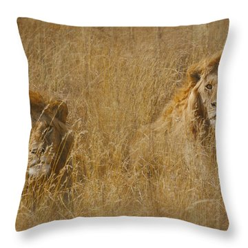 African Lion Brothers Throw Pillow