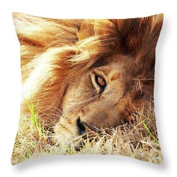 African Lion Closeup Lying In Grass Throw Pillow