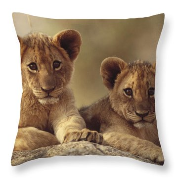 African Lion Cubs Resting On A Rock Throw Pillow by Tim Fitzharris