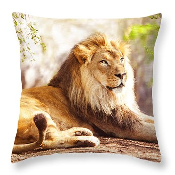 African Lion Laying In Forest Throw Pillow