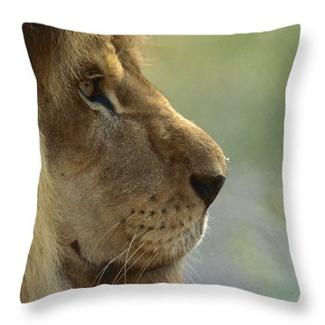 African Lion Panthera Leo Male Portrait Throw Pillow by Zssd