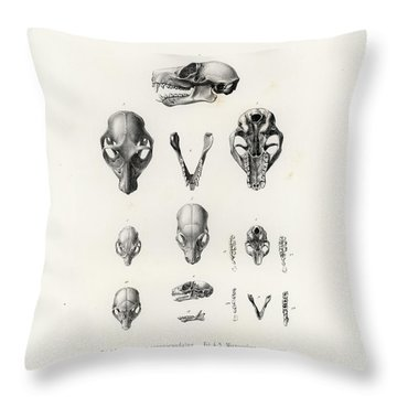 African Mammal Skulls Throw Pillow