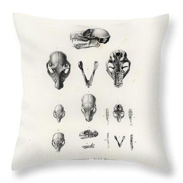 African Mammal Skulls Throw Pillow