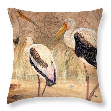 African Tantalus Pseudotantalus Ibis Throw Pillow