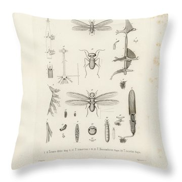 African Termites And Their Anatomy Throw Pillow