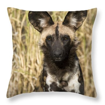 African Wild Dog Okavango Delta Botswana Throw Pillow