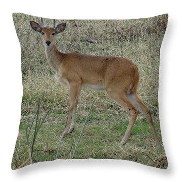 African Wildlife 1 Throw Pillow