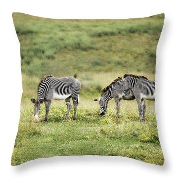 African Zebras Throw Pillow