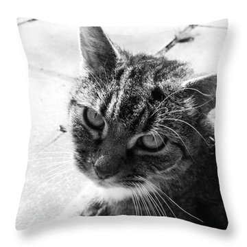 After Lunch Throw Pillow