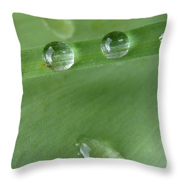 Throw Pillow featuring the photograph After The Rain by Jean Bernard Roussilhe