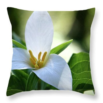 After The Rain Throw Pillow by Sheila Ping