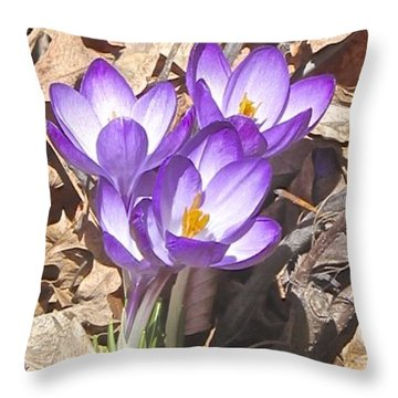 After The Snow Has Gone Throw Pillow