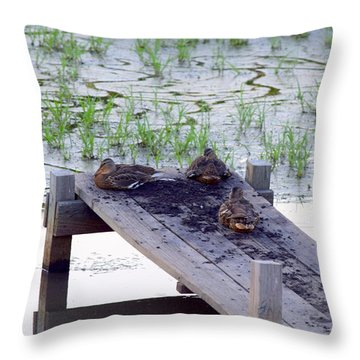 Throw Pillow featuring the photograph Afternoon Rest by Deborah  Crew-Johnson