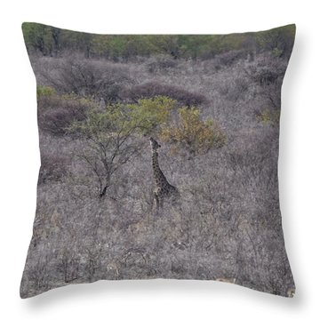 Afternoon Treat Throw Pillow by Ernie Echols