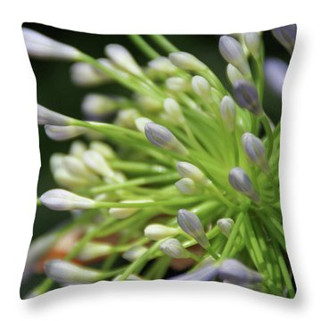 Agapanthus, The Spider Flower Throw Pillow by Yoel Koskas