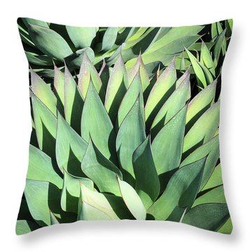 Agave Throw Pillow by Catherine Lau