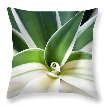 Agave Ray Of Light Throw Pillow by Catherine Lau