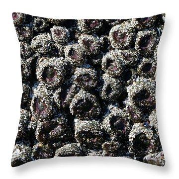Throw Pillow featuring the photograph Aggregating Anemones  by Christy Pooschke