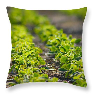 Agriculture- Soybeans 1 Throw Pillow