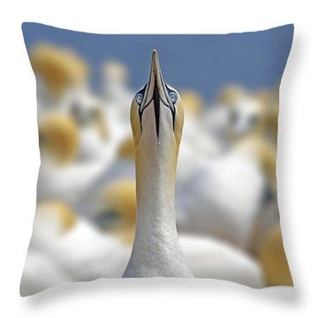 Ahead Throw Pillow by Tony Beck