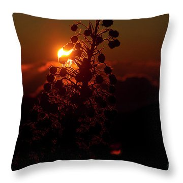 Throw Pillow featuring the photograph Ahinahina - Silversword - Argyroxiphium Sandwicense - Sunrise by Sharon Mau