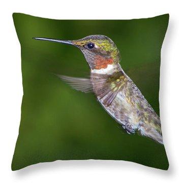 Ain't I Cute Throw Pillow