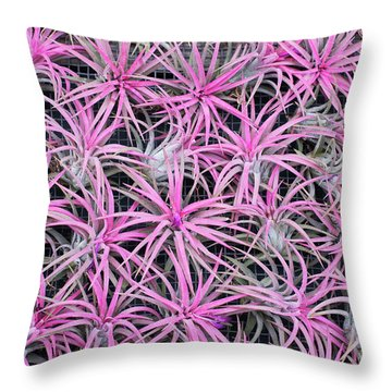 Throw Pillow featuring the photograph Airplants by Tim Gainey