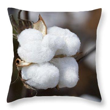 Alabama Cotton Boll Throw Pillow