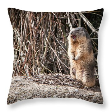 Alan,alan, Alan, Alan Throw Pillow