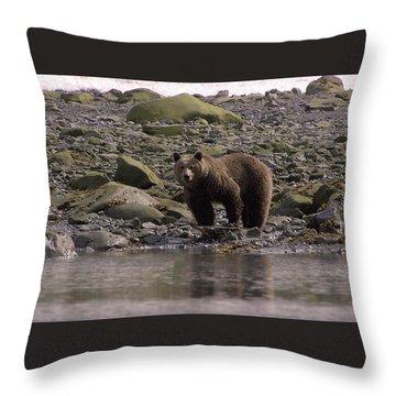 Alaskan Brown Bear Dining On Mollusks Throw Pillow