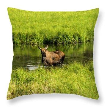 Alaskan Moose Throw Pillow