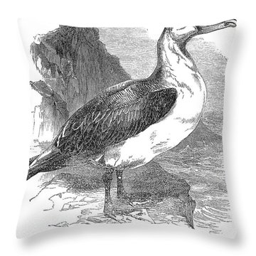 Albatross Throw Pillow by Granger