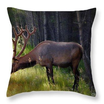 Alberta Elk  Throw Pillow