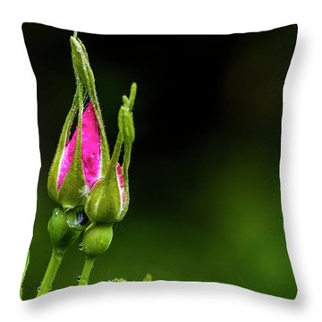Throw Pillow featuring the photograph Alberta Rose Buds by Darcy Michaelchuk
