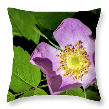 Throw Pillow featuring the photograph Alberta Wild Rose Opens For Early Sun by Darcy Michaelchuk