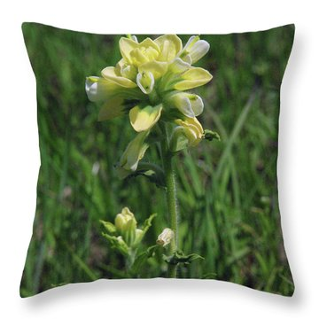 Albino Texas Paintbrush Throw Pillow by Robyn Stacey