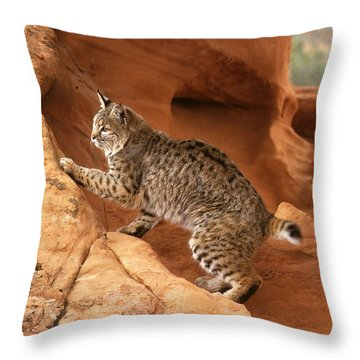 Alert Bobcat Throw Pillow by Larry Allan