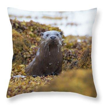 Alert Female Otter Throw Pillow