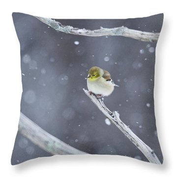 Throw Pillow featuring the photograph All Fluffy by Wanda Krack